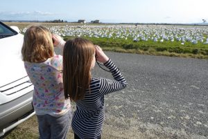 skagit guided birding tours family