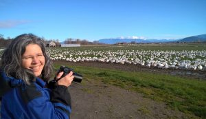 skagit guided birding tours geese swans